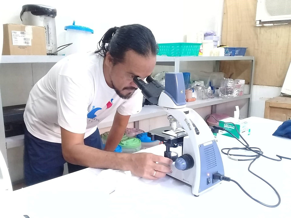AT THE HATCHERY'S LAB: Photo shows MFI Biodiversity Conservation Manager Pacifico Beldia II observe the early phase of the Tridacna gigas fertilized eggs' development, last June 1 at the laboratory of WPU Hatchery in Binduyan, Puerto Princesa City. On the average, a juvenile must spend six months in the hatchery before it is placed in ocean nurseries. When it is finally released into the wild, it has to be caged during the initial months for further protection it until it matures enough to survive on its own.