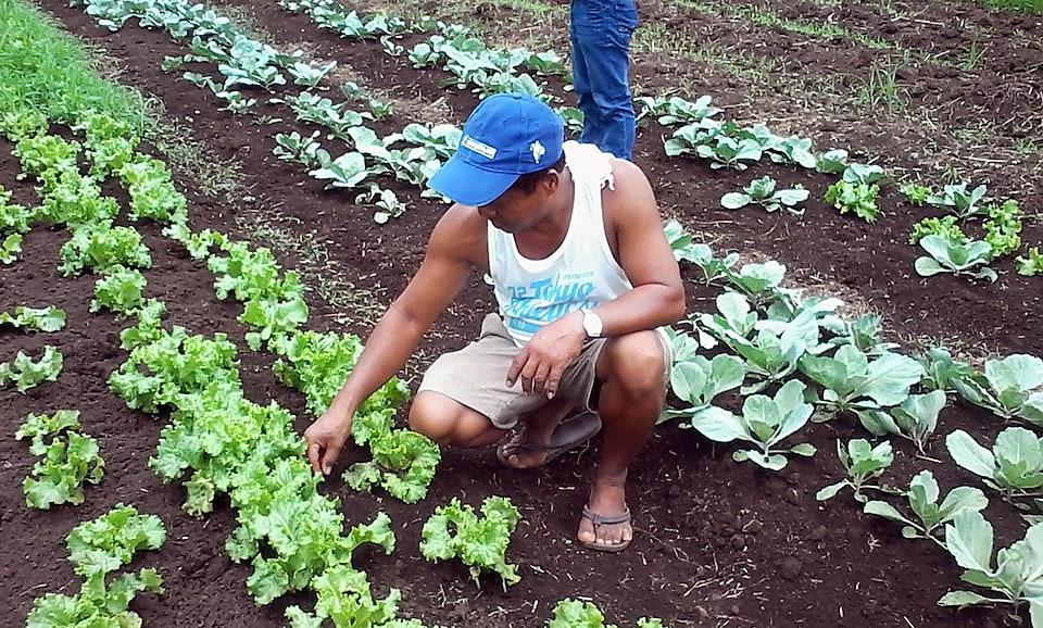 Man checking vegetable at green garden